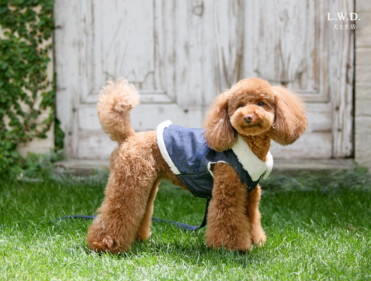 犬と生活 ボディハーネス ロングボアデニム【小型犬用ベスト型ハーネス,内側がボアで暖かい冬用ハーネス】