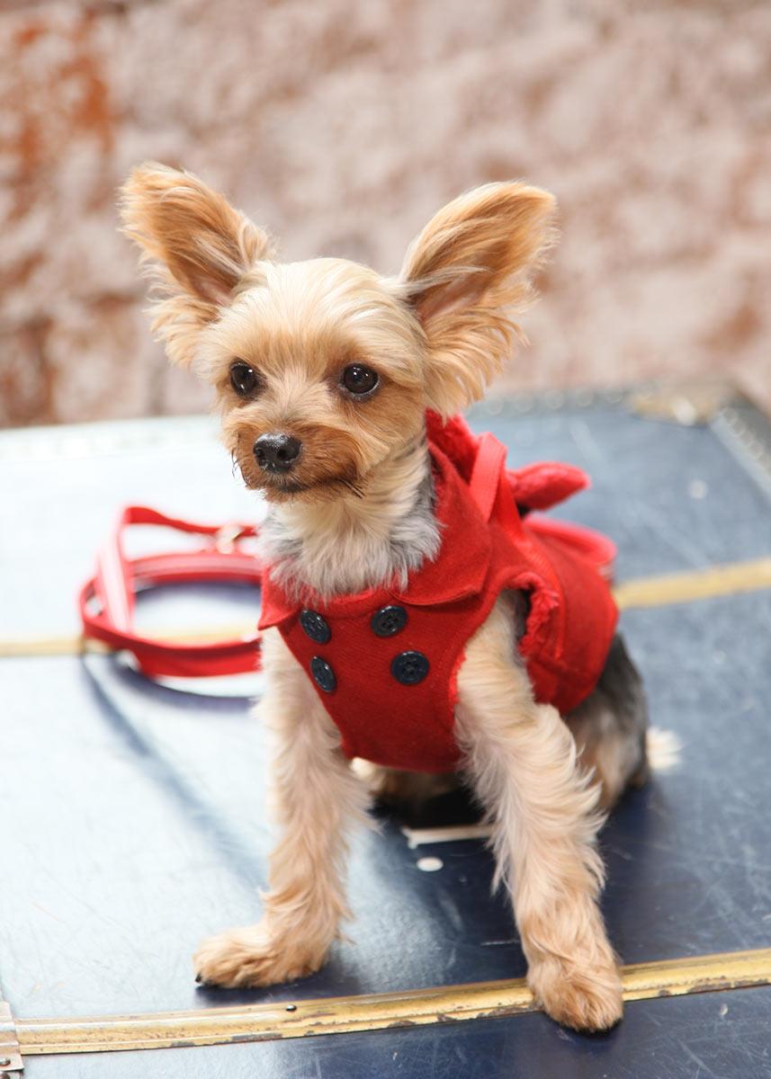 犬と生活 ボディハーネス ロングマリンPコート【小型犬用ベスト型ハーネス,内側がボアで暖かい冬用ハーネス】