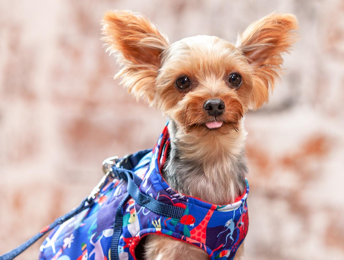 犬と生活 ボディハーネス ダウンロング サファリ・フラワー【小型犬用ベスト型ハーネス,内側がボアで暖かい冬用ハーネス】