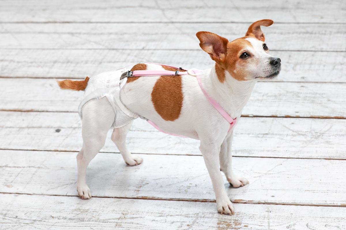 犬と生活 3点式サスペンダー 【老犬 おむつ 介護】
