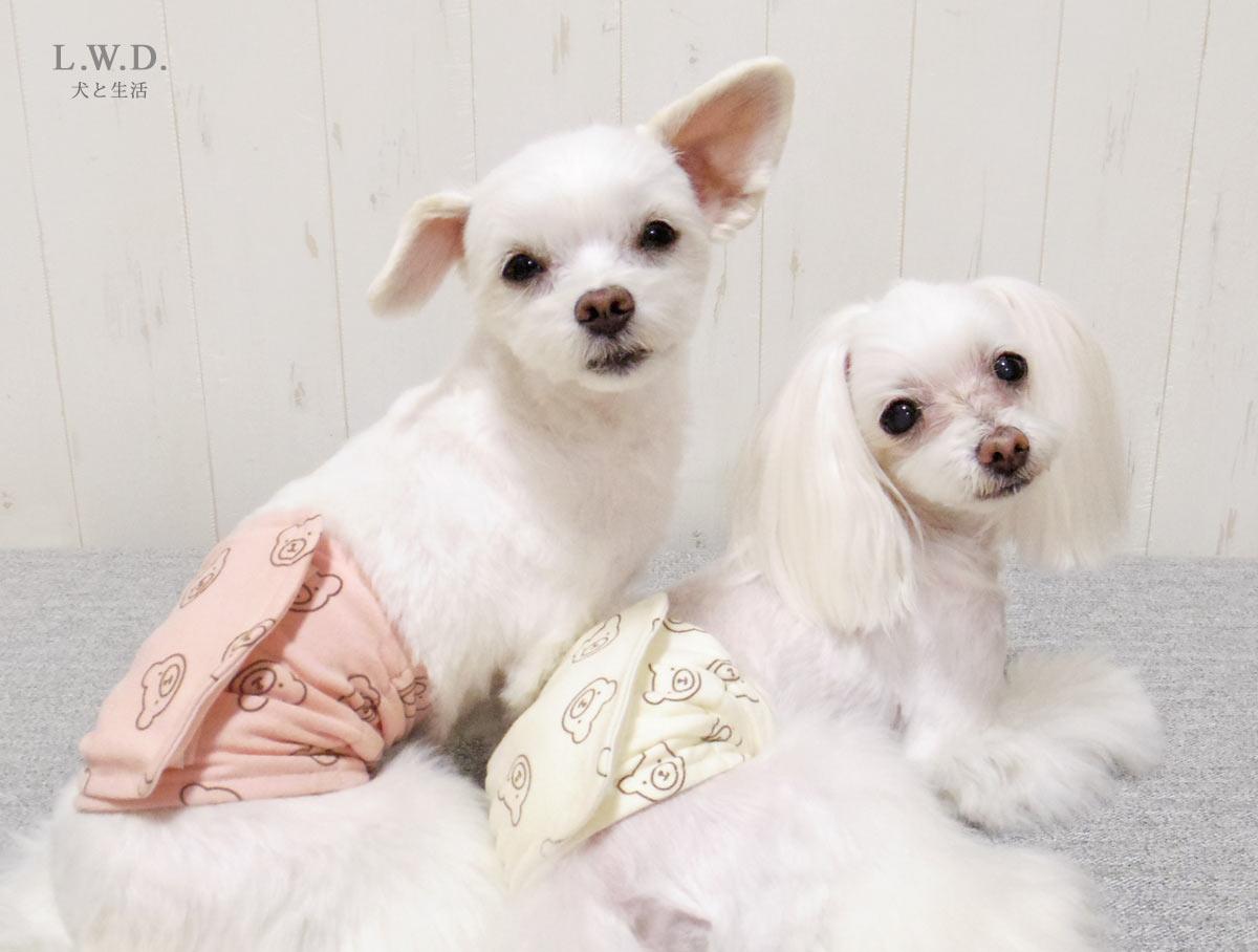 犬と生活 腹巻きクレンゼ 【老犬 体を温める 免疫力 体力】