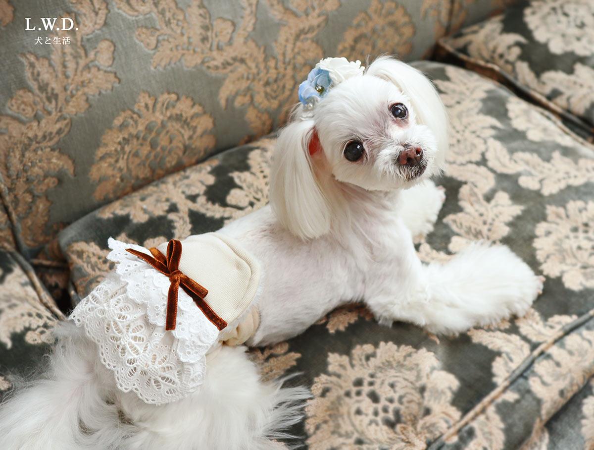 犬と生活 腹巻きサーモベルト フリルリボン 【老犬 体を温める 免疫力 体力】