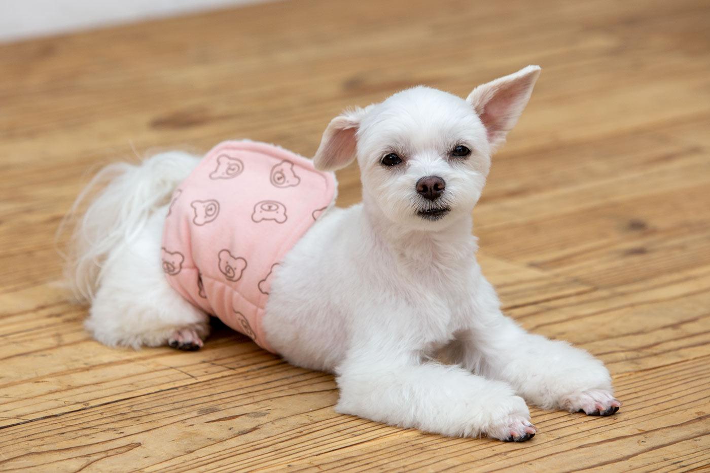 犬と生活 腹巻きサーモベルト くまさん 【犬服 冬服 小型犬】