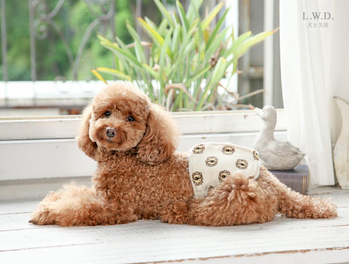 犬と生活 腹巻きサーモベルト ライオン 【老犬 体を温める 免疫力 体力】