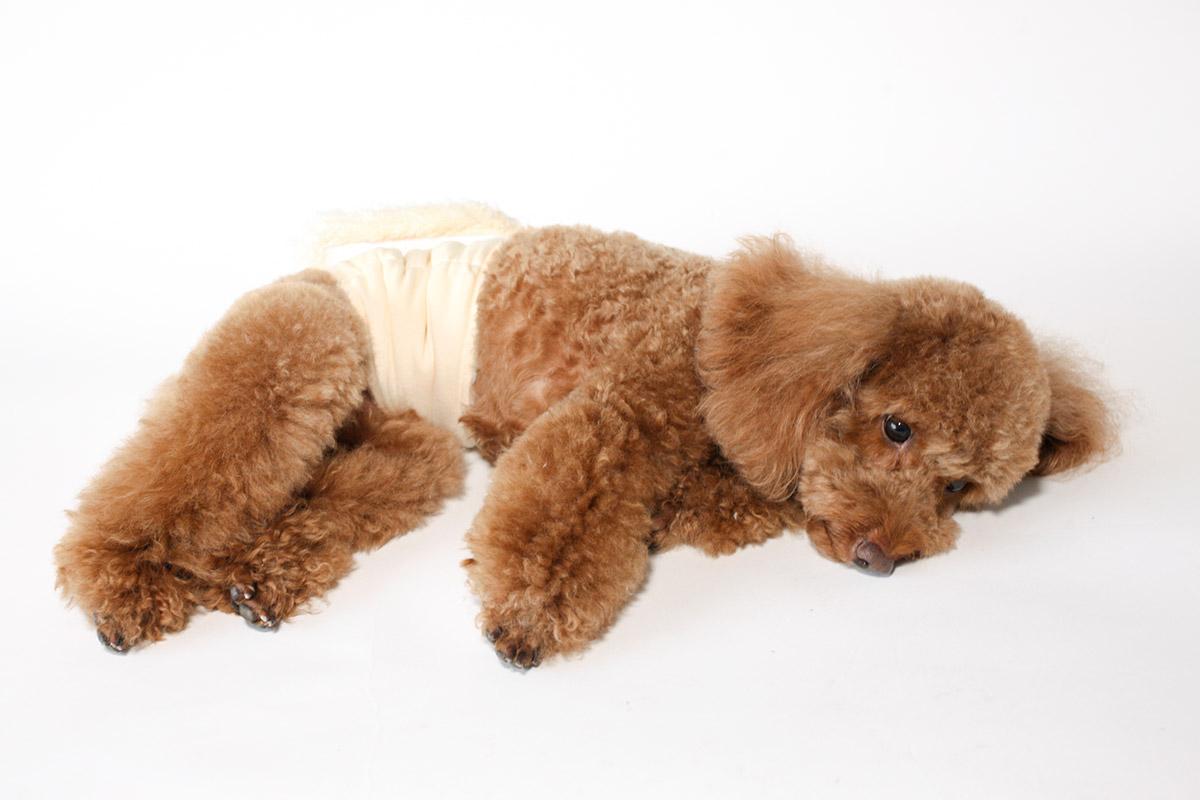 犬と生活 腹巻きサーモベルト no dog no life 【老犬 体を温める 免疫力 体力】