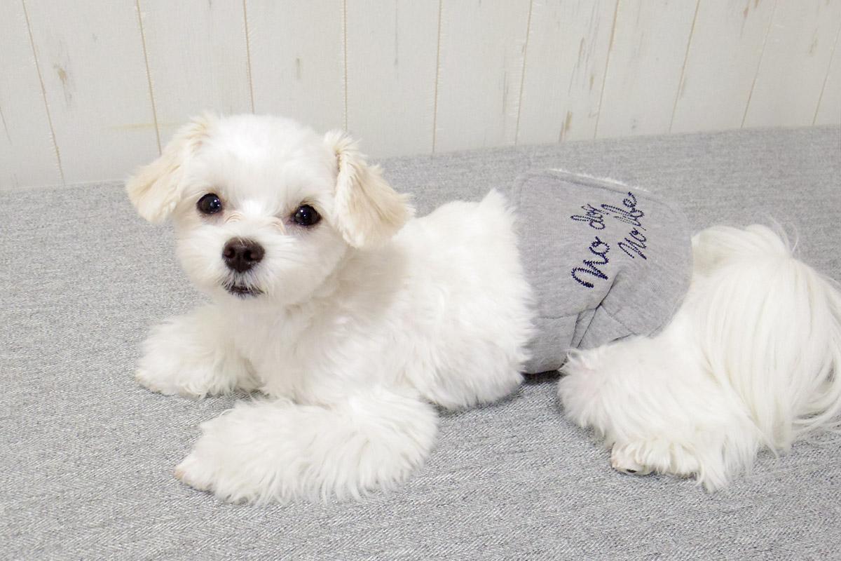 犬と生活腹巻きサーモベルト no dog no life 【老犬 体を温める 免疫力 体力】