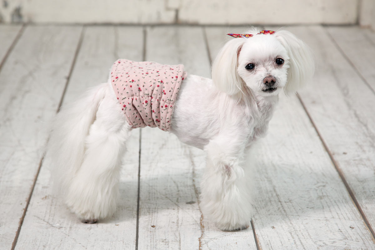 犬と生活 腹巻きサーモベルト プチフラワー 【老犬 体を温める 免疫力 体力】