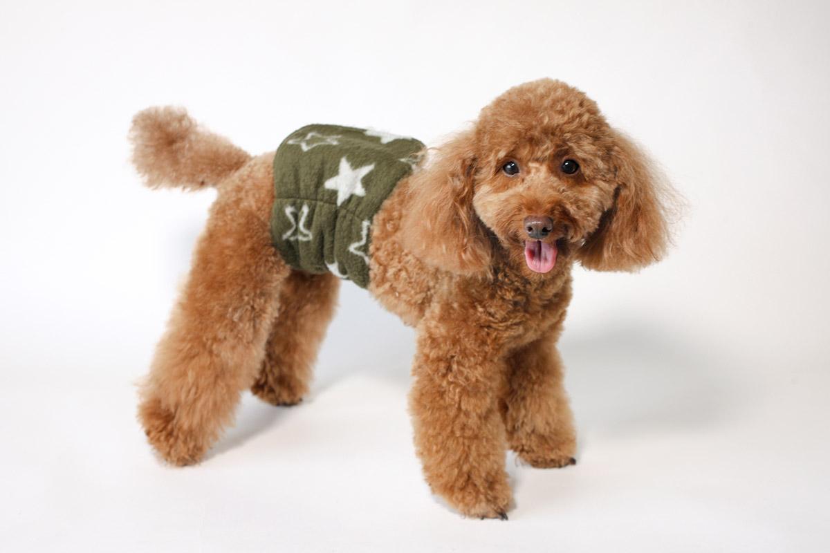 犬と生活 腹巻きサーモベルト スター・フラワー 【犬服 冬服 小型犬】