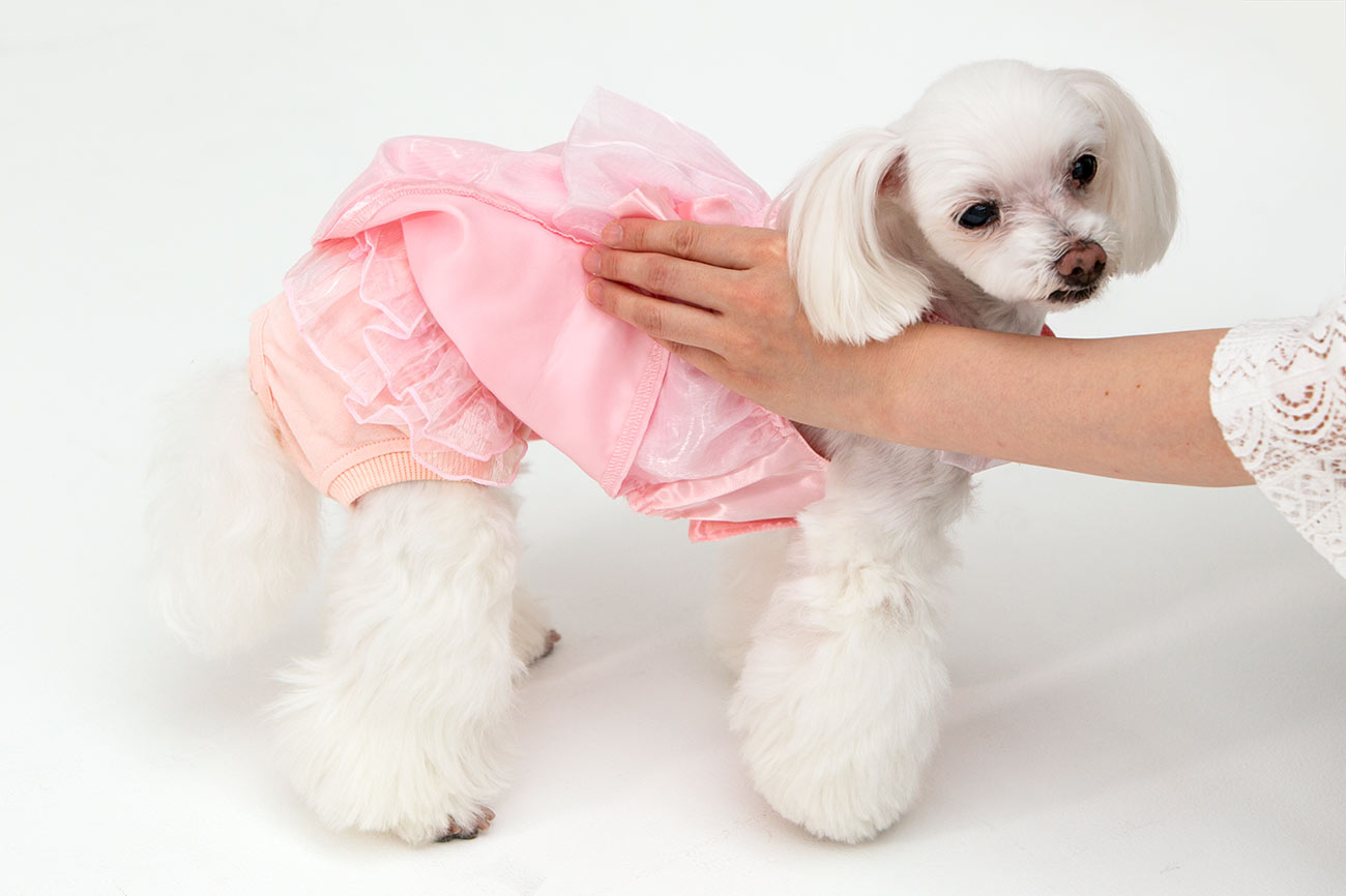 犬と生活 オムツカバーパンツ型 オーガンジーフリル