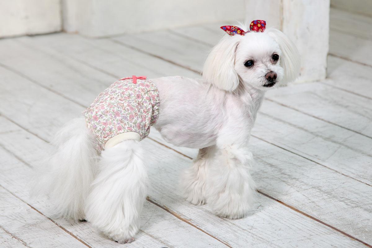 犬と生活 オムツカバー パンツ型 【お出かけ,老犬介護,おしゃれ】