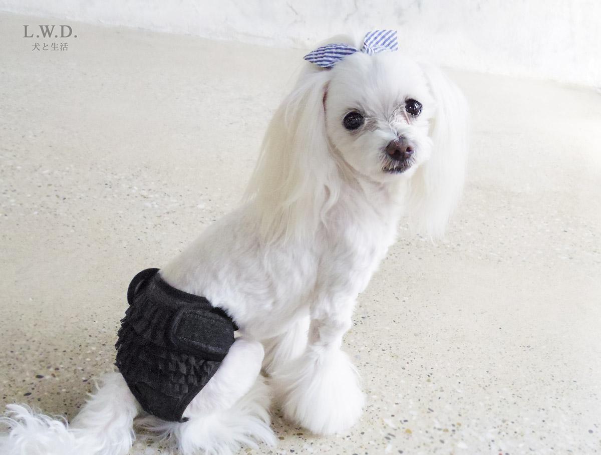 犬と生活 サニタリーパンツ シフォンフリル
