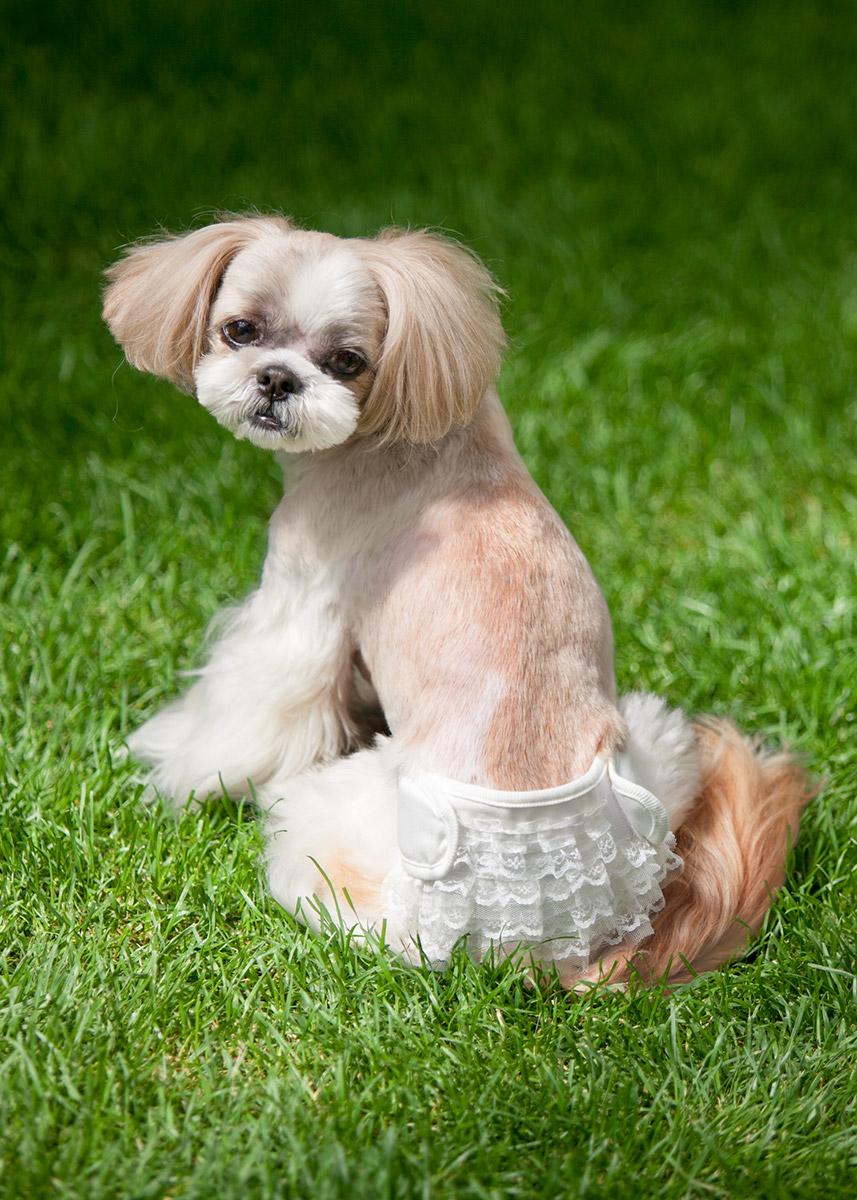 犬と生活 フリフリオムツカバー 【見せるパンツ】