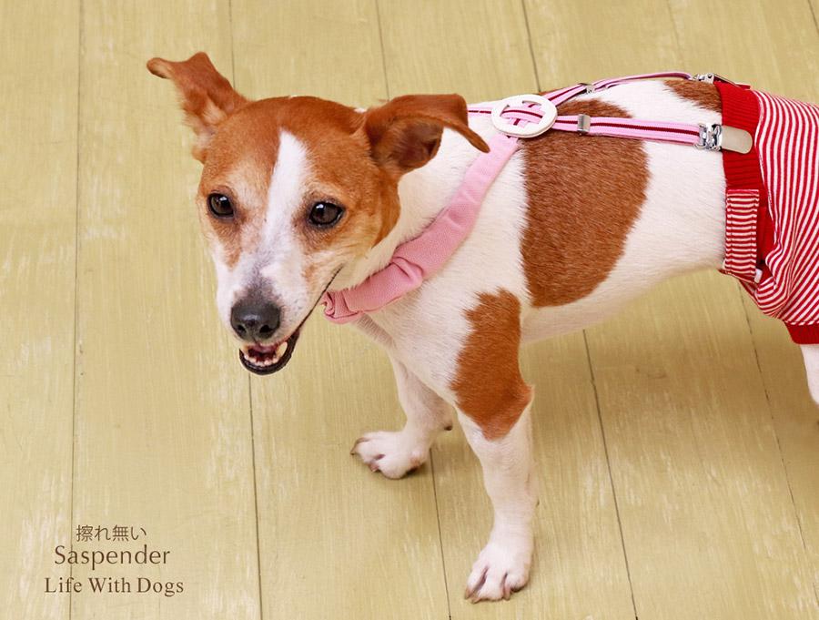 犬と生活 擦れないサスペンダー 小型犬 中型犬 のサスペンダー