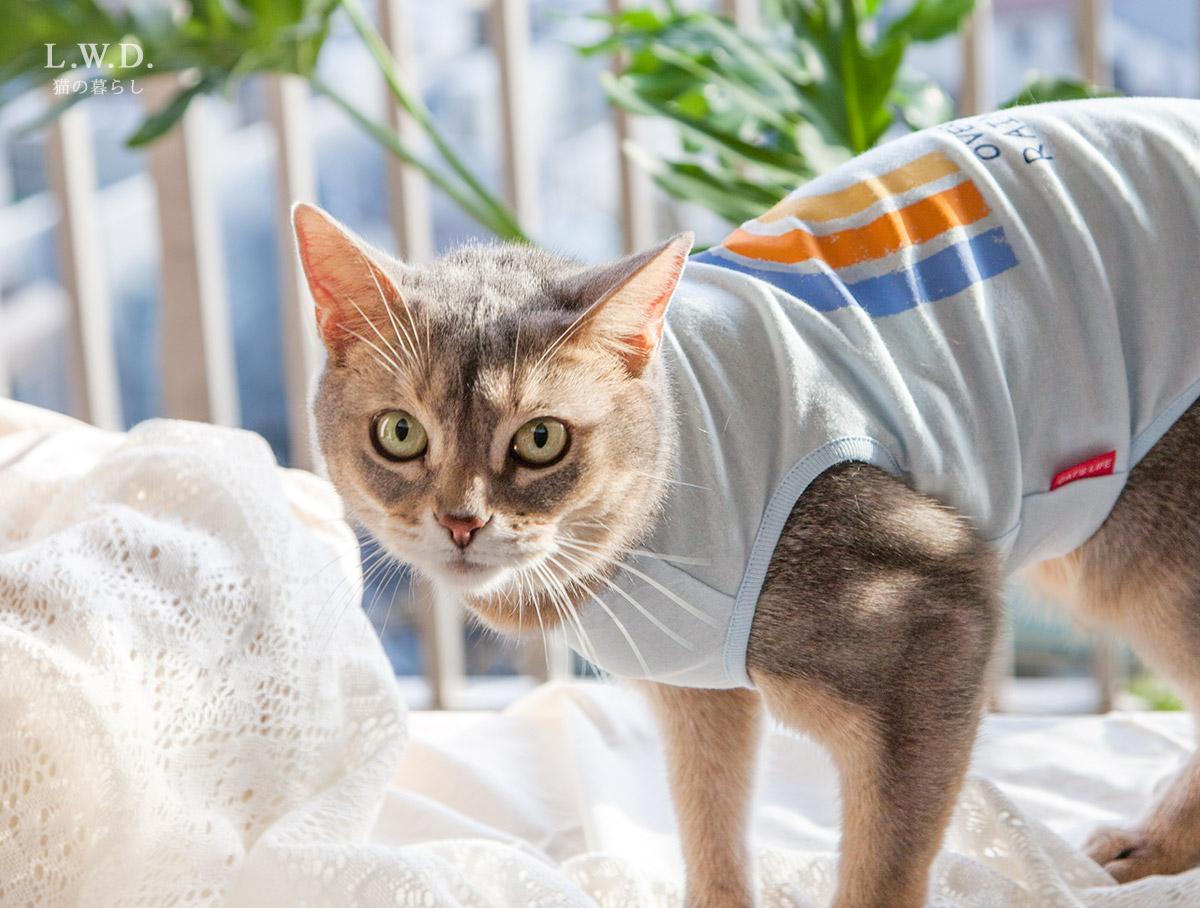 猫の暮らし クレンゼタンクレインボー キャット(抗菌・抗ウイルス機能) 【猫保護服,皮膚炎,舐め壊し】
