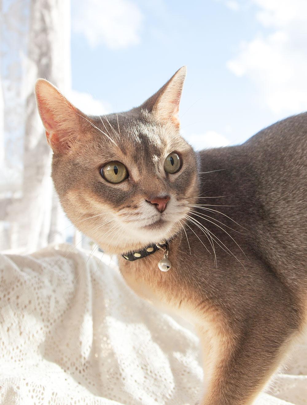 猫の暮らし キャットカラー ラメドット 【猫の首輪 リボン 鈴付き 刺繍】