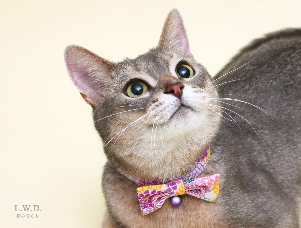 猫の暮らし キャットカラーお着物リボン 【猫の首輪 リボン 鈴付き 和柄 和風】
