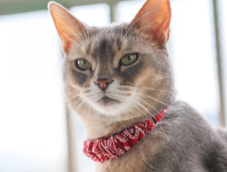 猫の暮らし アジャスター付きシュシュカラー バンダナ 【猫の首輪 シュシュカラー ゴム バンダナ】