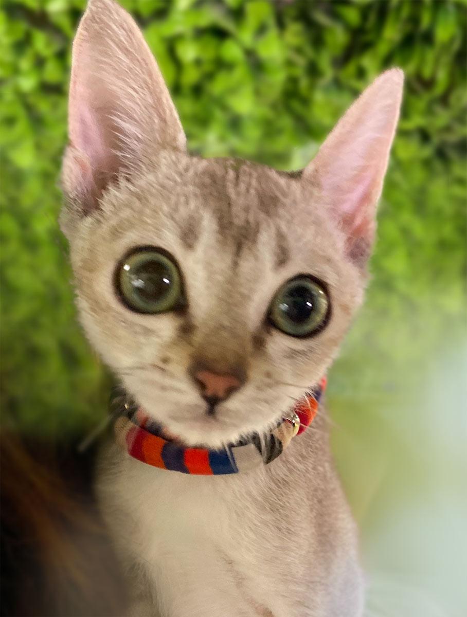 L.W.D. 猫の暮らし ふわふわエスケープカラーBabyサイズ