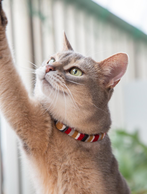 猫の暮らし ふわふわエスケープカラー 【猫の首輪 ストレスフリー バックルなし】