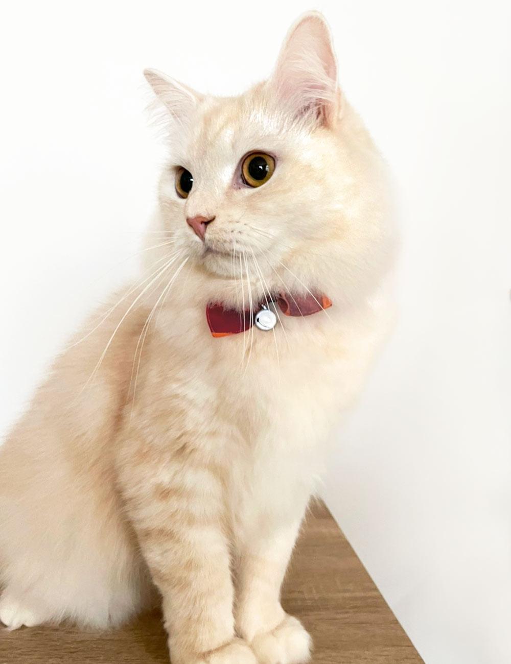 猫の暮らし サイズが変えられるシュシュカラー マドラスチェック
