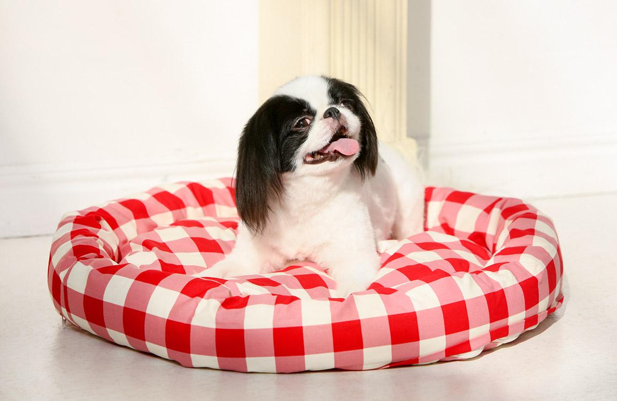犬と生活 ロウカドラー ギンガム 【ベッド 洗える】